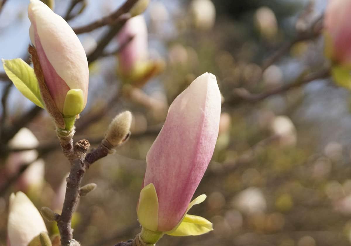 Nyíri Andrea egyedi ékszer tavasz